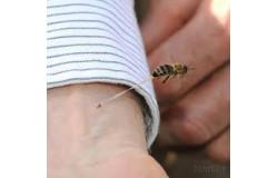 Méhészkesztyűk
